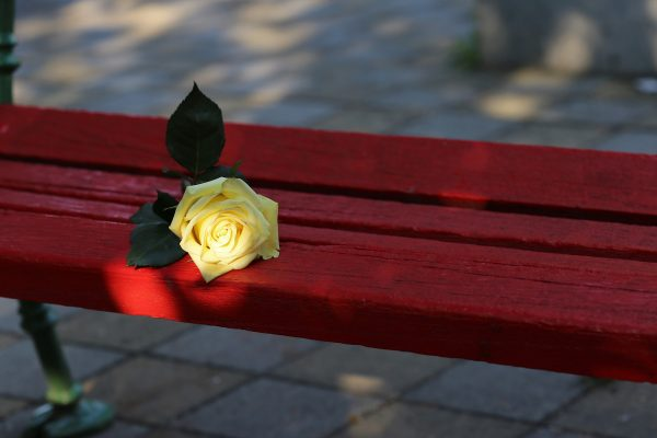 yellow-rose-on-red-bench-3624558_1920