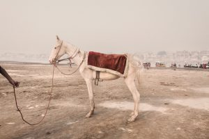 A horse used to transport the devotees along the banks of the Ganges, Varanasi, 2008
