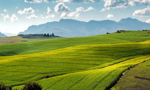 agriculture-countryside-crop-cropland-259280